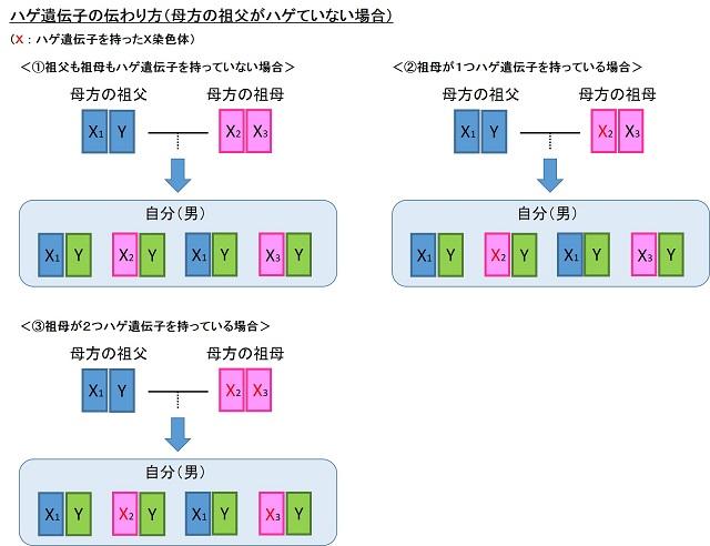 ハゲ遺伝子の伝わり方2