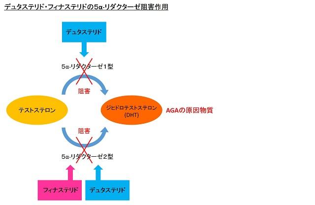 デュタステリド・フィナステリドの5α-リダクターゼ阻害作用