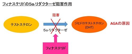5α-リダクターゼの阻害作用