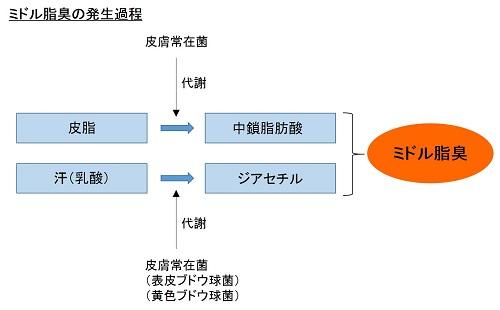 ミドル脂臭の発生過程