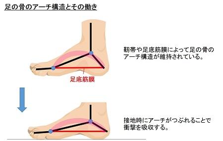 足の骨のアーチ構造