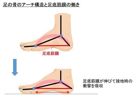 足底筋膜の働き
